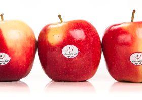 Ambrosia apples report fluid sales