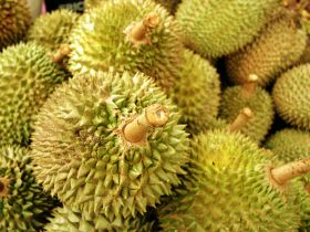 More durians for Ekovest