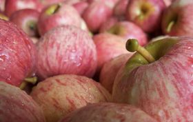 Favourable forecast for NZ apples and pears