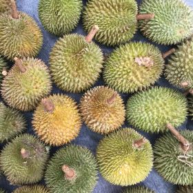 US surprise for Philippine durians