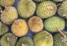 Indonesian durian sells for US$1,000