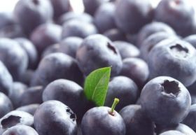 Chilean organic blueberry exports hit new high
