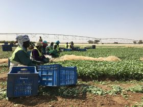 Waitrose expands foundation to African growers