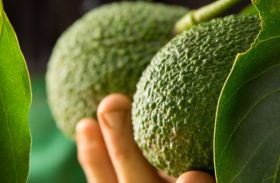 Avocados' nutritional value 'justifies water use'