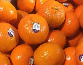 Mandarins Delite consumers