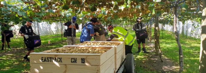 Early start for NZ kiwifruit