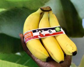 UGPBAN launches banana for kids