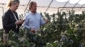 Tesco visits Planasa ahead of blueberry launch