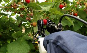 "Raspberry picker bots ""could arrive in five years"""