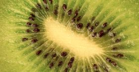Encouraging kiwifruit trials in Pakistan