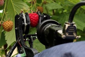 £550k boost for raspberry robot project