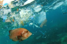 Waitrose to fund plastic-pollution fellowship