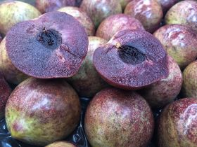Distributors announced for new late plum variety