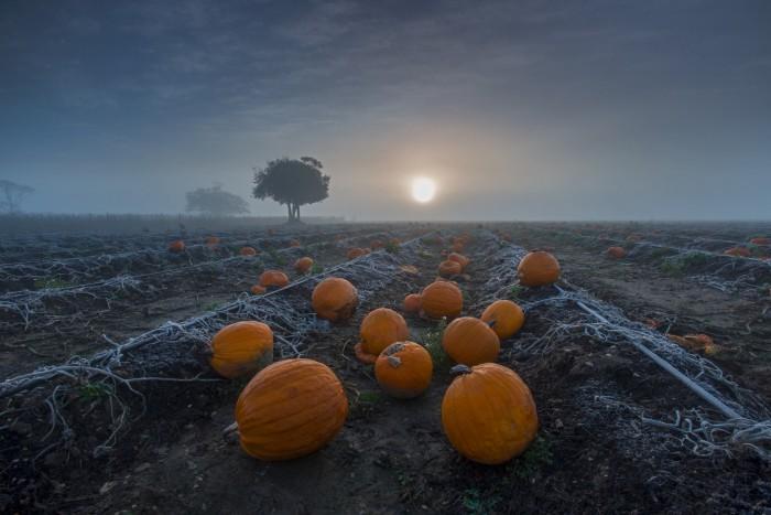 1st_Andrew Newey_Pumpkins at Sunrise_Hi-Res web