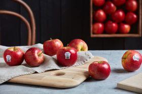 Envy apples begins third season