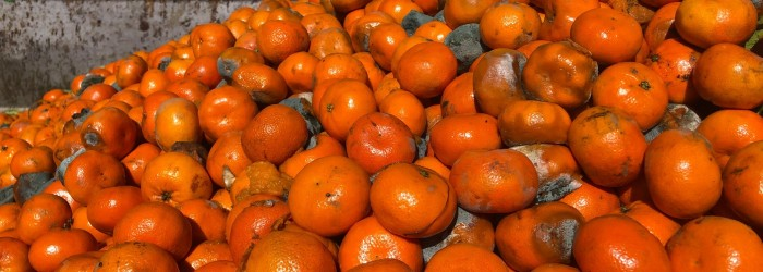 AMT works to reduce citrus waste