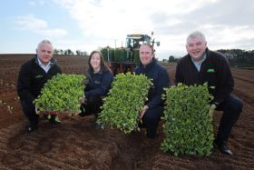 Brassicas planted early for NI growers