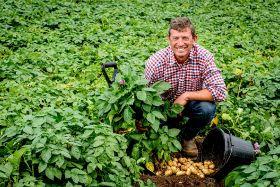 Cornish new potatoes hit shelves