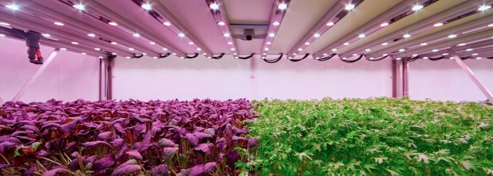Planet Farms crops