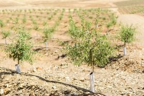 Veracruz invests in almond growth