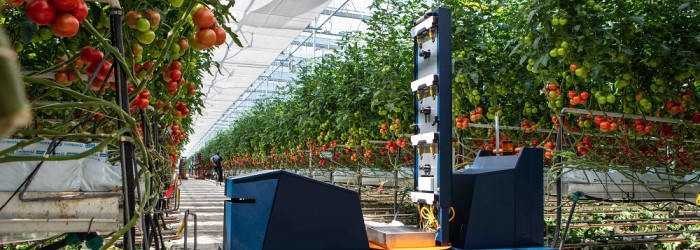 Tomato robot set to predict the future