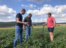 OTC goes for RSA sweet potatoes