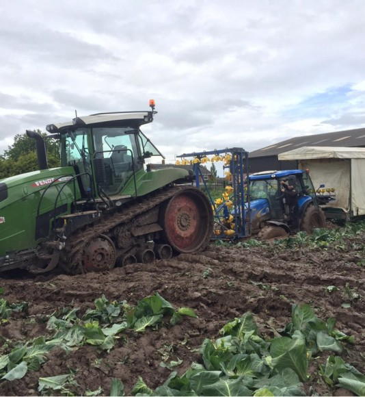 Brassica growers suffering 'worst flooding for decades'
