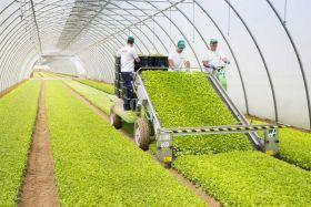 La Linea Verde bags new production