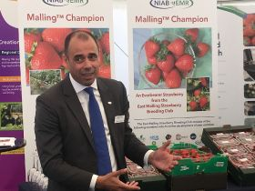 NIAB EMR unveil new strawberry varieties