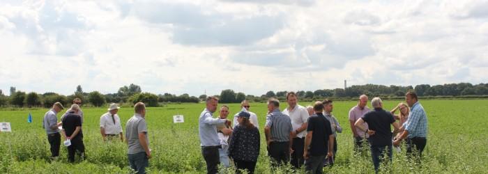 Carrot growers seek linuron alternative