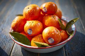 Mandarins set to Delite Australians