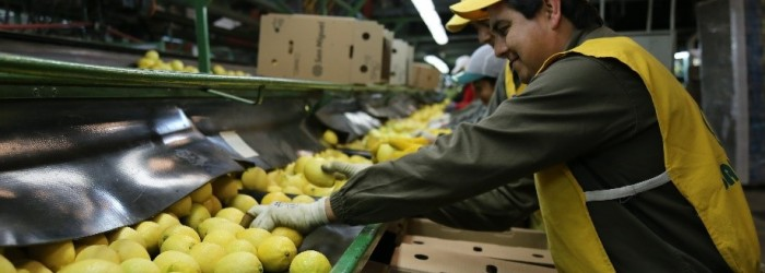 Argentina ships first lemons to India
