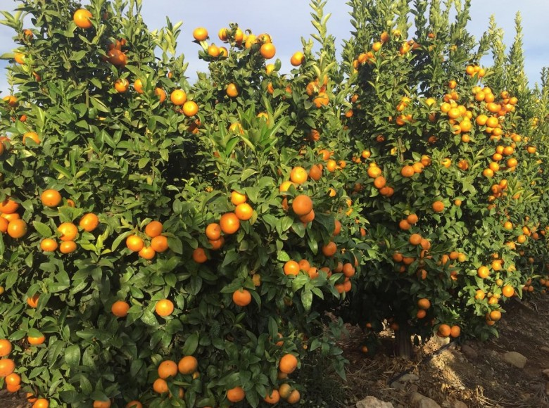Duda Launches Citrus Import Programme