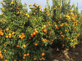 Duda launches citrus import programme