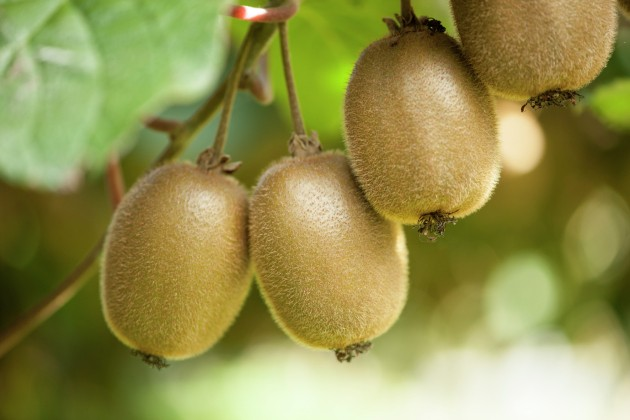 Study evolves thinking on kiwifruit genetics