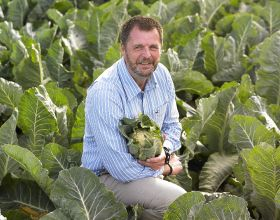 Brassica alert extends to light leaf spot disease