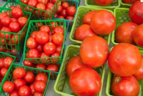 Researchers look to improve tomato taste