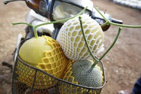 Optimising the Asian melon market
