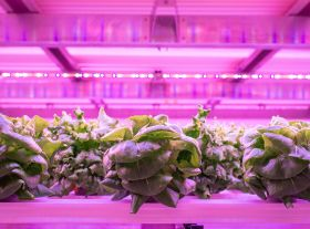 UK 'closing in' on large-scale vertical lettuce production