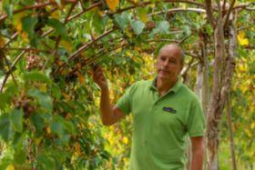 British kiwi berry season underway