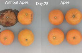 Apeel runs mandarin test in UK