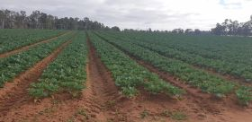 Promising start to organic partnership