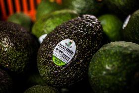 Greenyard USA/Seald Sweet boosts avo business