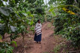 UK growers among Ugandan tree project
