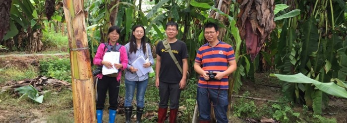 New hope for banana industry