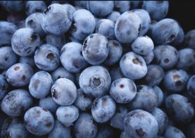 Hortifrut moves into Colombian blueberries