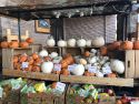 Americans' gourdy love affair with pumpkins