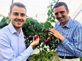 New raspberries put on show