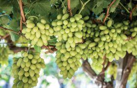 HaciendasBio builds up premium organic offering