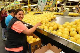 IMG Citrus celebrates four decades of growth